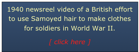 1940 newsreel video of a British effort to use Samoyed hair to make clothes for soldiers in World War II. 