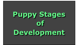 Puppy Stages
